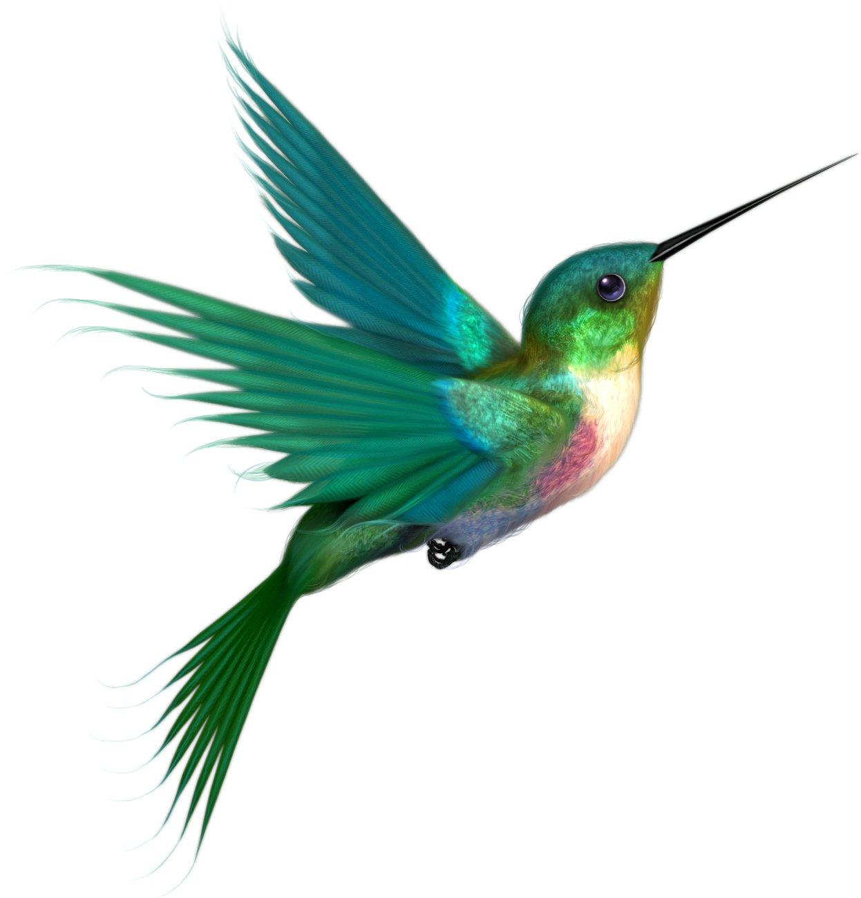 Free Printable Hummingbird Coloring Pages For Kids Pictures to pin on ...