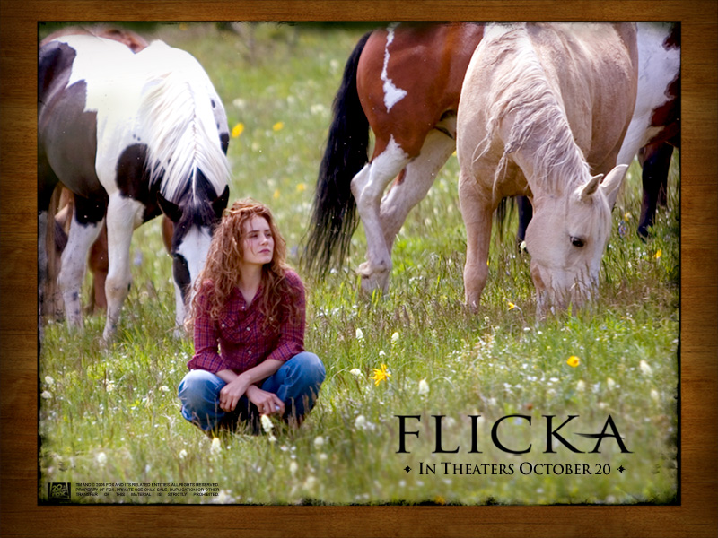 my Friend Flicka Book Series Book my Friend Flicka